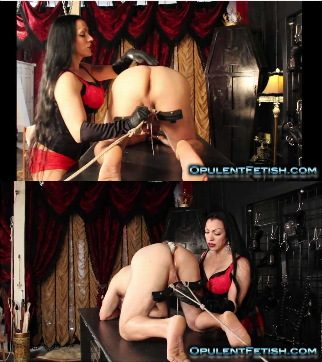 Lord C. recommendet Femdom wearing the humbler