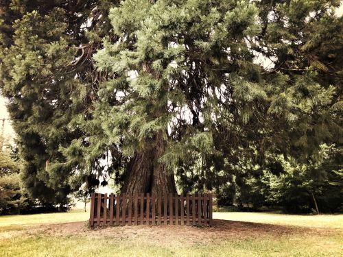 Landscaping mature trees el paso texas