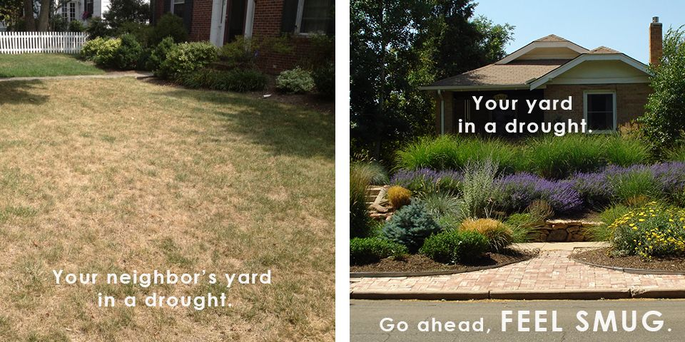best of Paso Landscaping el mature texas trees